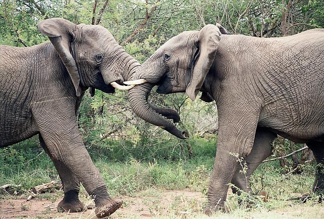 elephants-1355424_640